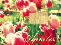 masni_aprilis_1200_1600 copy